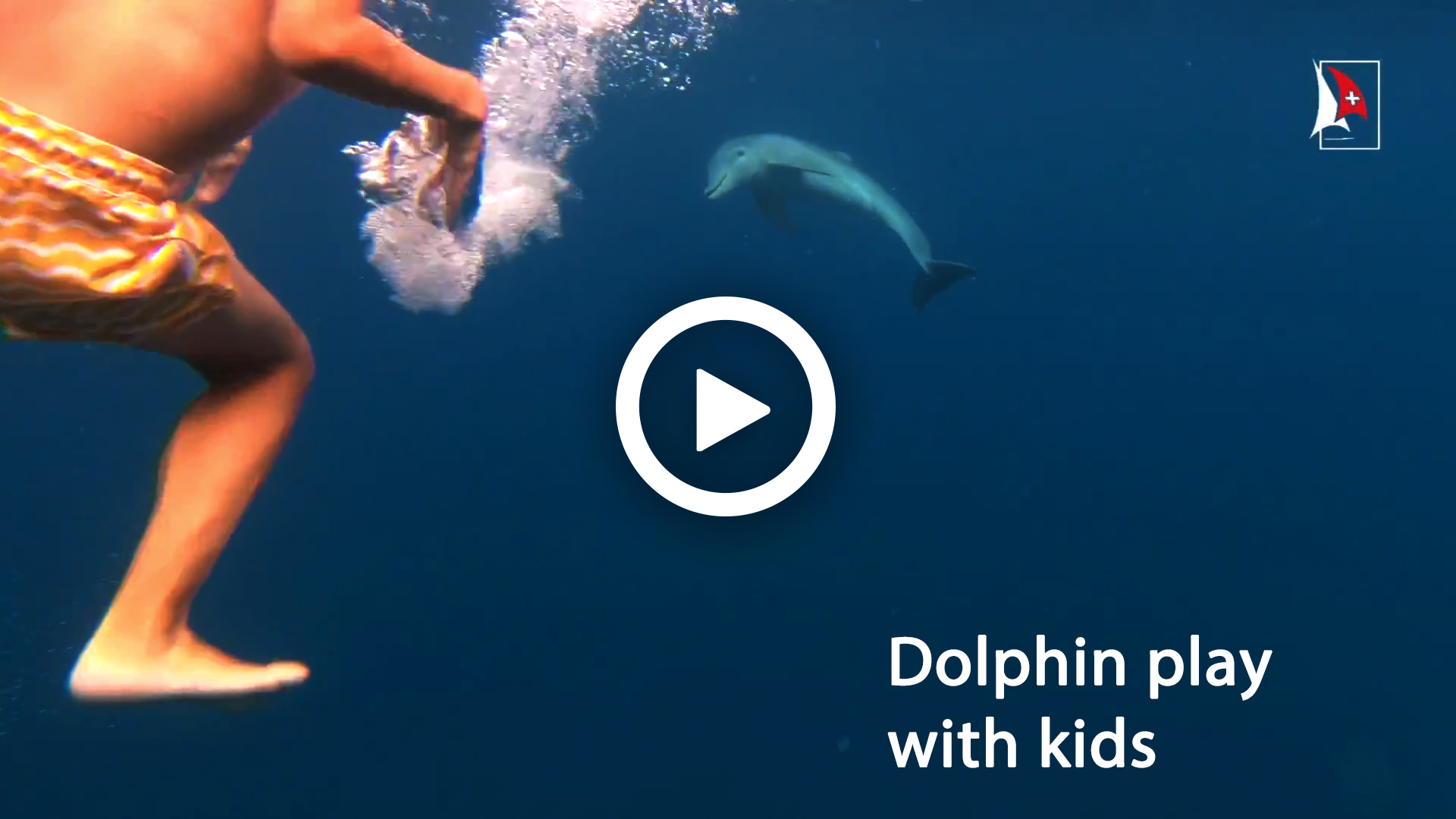Sailing video to sale - dolphin play with kids